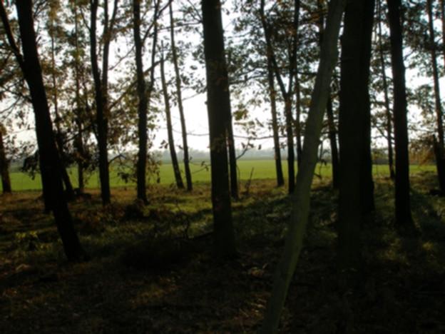 Działka na sprzedaż, Pęgów Pod Lasem, 3200 m² | Morizon.pl | 8669