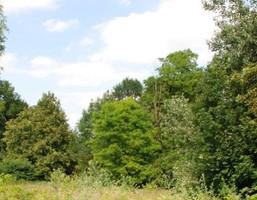 Komercyjne na sprzedaż, Dalewice, 31200 m²