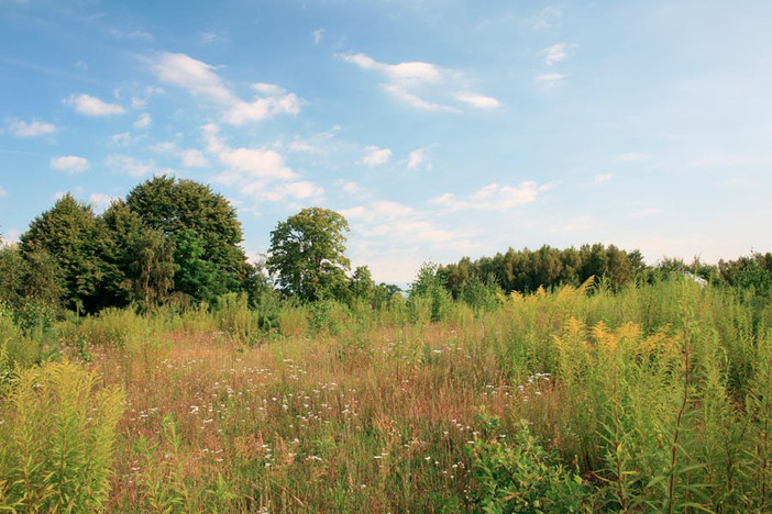 Działka na sprzedaż, Borzestowo, 14001 m² | Morizon.pl | 0116