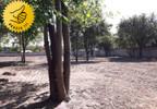 Działka na sprzedaż, Błonie, 3359 m² | Morizon.pl | 3381 nr2