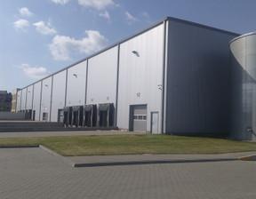 Magazyn, hala do wynajęcia, Września, 2000 m²