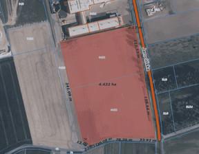 Działka na sprzedaż, Golina Jarocińska, 44231 m²