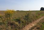 Działka na sprzedaż, Rzeplin, 10000 m² | Morizon.pl | 3588 nr7