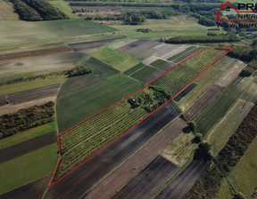 Działka na sprzedaż, Busko-Zdrój, 42700 m²