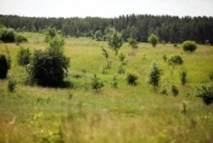 Działka na sprzedaż, Jedwabno, 1267 m² | Morizon.pl | 7519