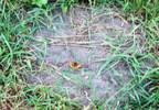 Działka na sprzedaż, Bojmie, 3294 m² | Morizon.pl | 7764 nr5