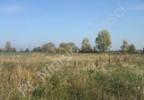 Działka na sprzedaż, Chrzanów Mały, 10000 m² | Morizon.pl | 2918 nr3