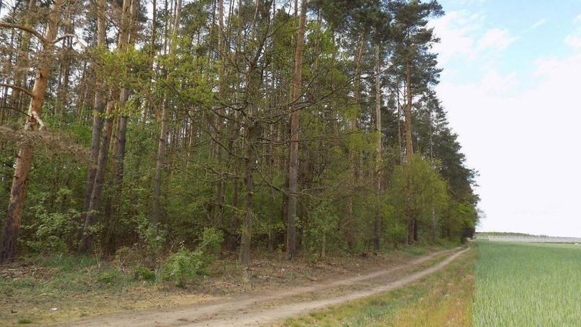 Działka na sprzedaż, Rokietnica, 44017 m²   Morizon.pl   6809