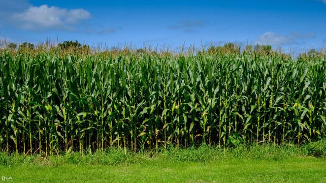 Morizon WP ogłoszenia   Działka na sprzedaż, Zachowice, 48400 m²   6575