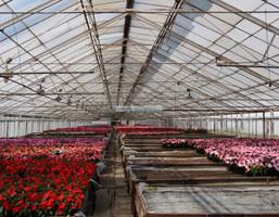 Morizon WP ogłoszenia | Działka na sprzedaż, Lesznowola Al.KRAKOWSKA., 6226 m² | 2413