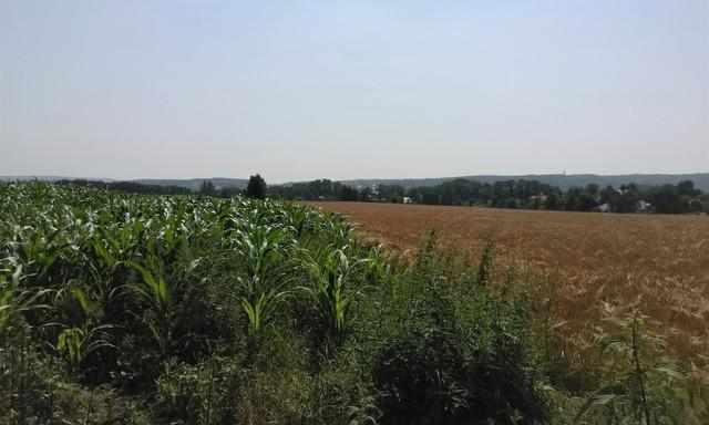 Rolny na sprzedaż <span>Krakowski, Zabierzów, Bolechowice, Siedliski</span>