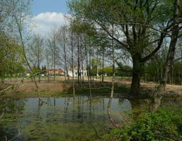 Morizon WP ogłoszenia   Działka na sprzedaż, Rajszew, 3000 m²   7292