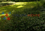 Morizon WP ogłoszenia | Dom na sprzedaż, Magdalenka, 100 m² | 4547