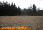 Morizon WP ogłoszenia | Działka na sprzedaż, Gruszków, 8000 m² | 7929