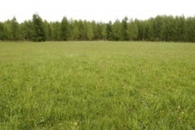 Morizon WP ogłoszenia | Działka na sprzedaż, Piasutno, 3001 m² | 3556