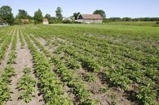 Rolny na sprzedaż <span>Szczycieński, Szczytno, Lipowiec Mały</span>