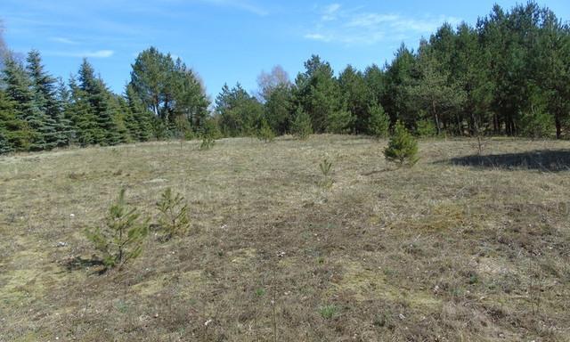 Działka na sprzedaż <span>Kościerski (pow.), Stara Kiszewa (gm.), Konarzyny</span>