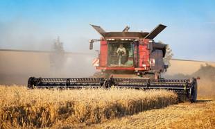 Mieszczuchy kontra rolnicy: donosy na kombajn i piejącego koguta